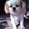 我有一只可爱的小狗要找领养哦 3岁