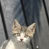捡到的流浪小猫,求爱心人士领养。