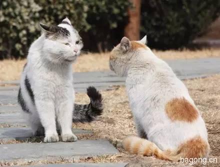 2015可爱猫图集8