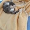 捡来的一个月大的猫咪,现在三个多月大了,因家里空间太小不合适猫咪活动,求有缘人领养